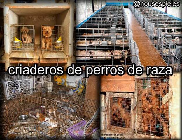 S.O.S. POR FAVOR NO COMPRES ANIMALES, ADOPTA Y SALVA VIDAS - DONT BUY ANIMALS, ALWAYS ADOPT - Animales en General - Todo Estados Unidos